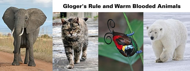 Gloger's Rule and warm blooded animals