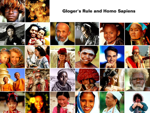 Gloger's Rule - Human Skin Colour