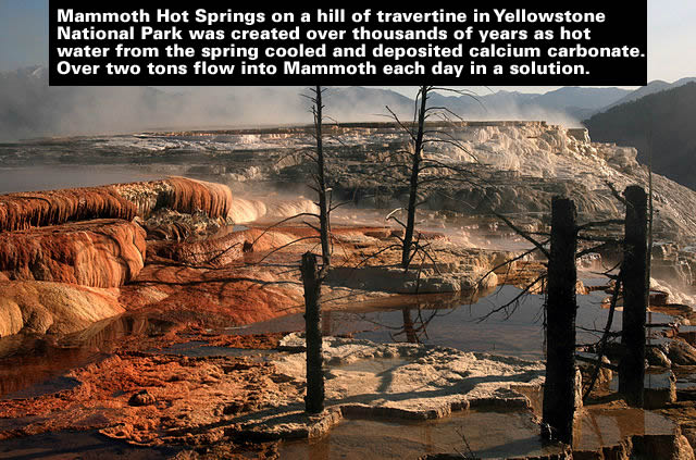 Dead_trees_at_Mammoth_Hot_Springs