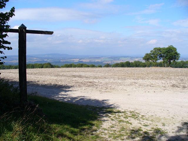 South Downs Way - Woolavington Down