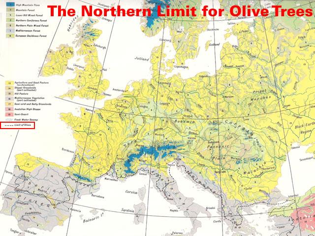 Limit of Olives