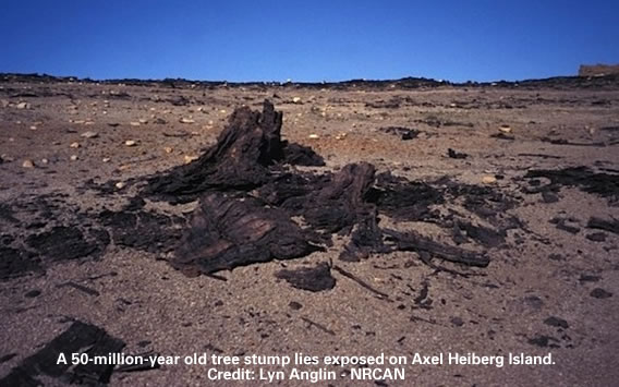 50-million-year old tree stump