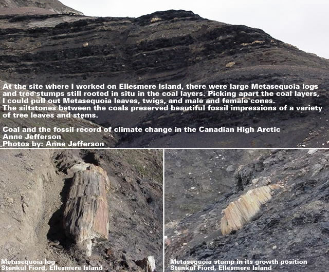 Ellesmere Coal