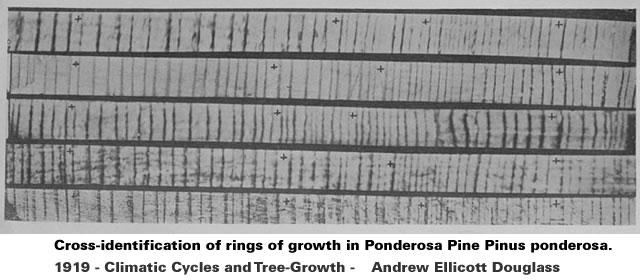 Rings of growth in Ponderosa Pine