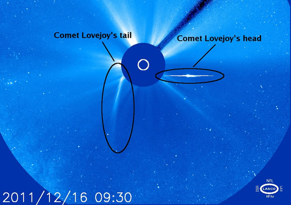 Comet Lovejoy without a Tail