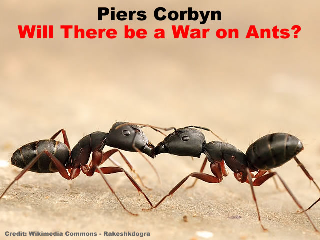 Will there be a war on ants