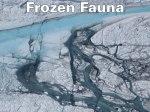 Frozen Fauna