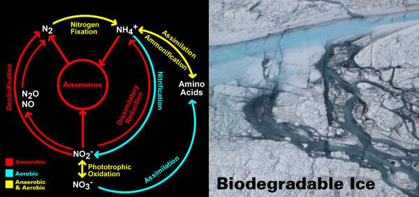 Biodegradable Ice