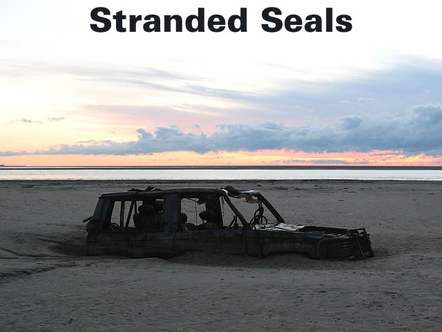 Stranded Seals