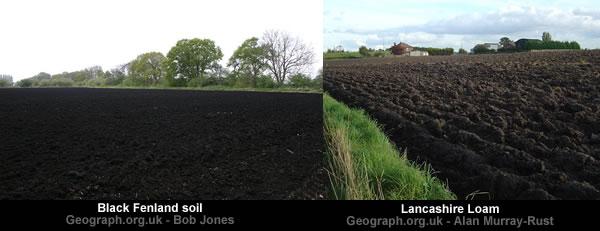 English Black Soils