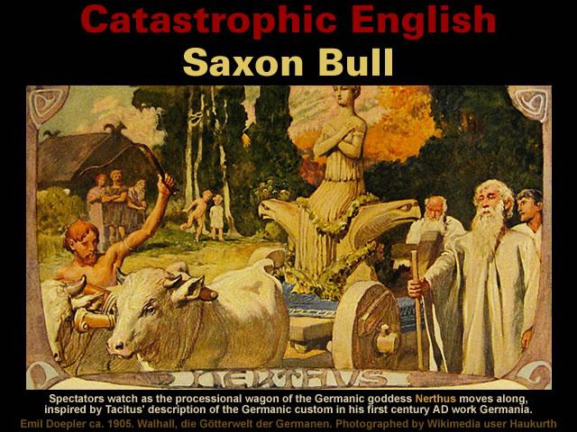 Saxon Bull