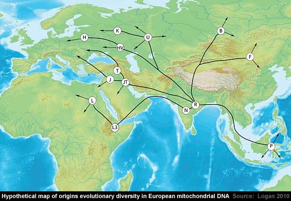 European mitochondrial DNA