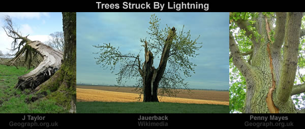 trees-struck-by-lightning
